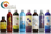 "View the ""FREE Maple Holistics Hair Products"" coupon page"