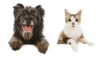 "View the ""FREE Pet Food and Stuff from PETSMART!"" coupon page"