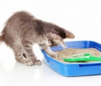 "View the ""FREE ViviPet Cat Litter!"" coupon page"
